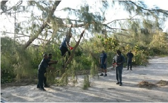 Workers removing branches from fallen tree in Andros
