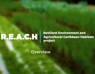 Resilient Environment & Agricultural Caribbean Habitats (R.E.A.C.H) Project